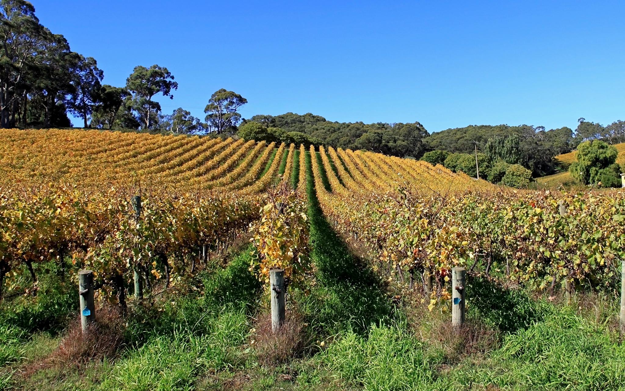 The conclusion of the organisation mondiale du vignoble et du vin (oiv