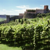 "SOAVE IN LONDON WITH ""VOLCANIC WINES"""