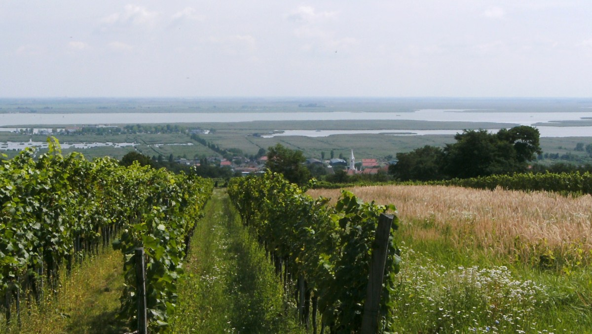 An exploration of the fabulous Höpler winery #wine #austria #höpler
