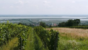 An exploration of the fabulous Höpler winery #wine #austria#höpler