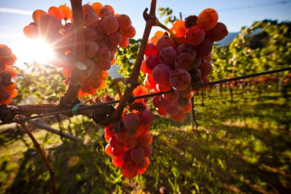 NUSSBAUMER BY CANTINA TRAMIN IS THE ONLY WHITE WINE CONVINCING ALL ITALIAN TOPGUIDES