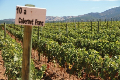 Chile leads the imported wine market inBrazil