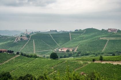 Alta Langa, sparkling wine of the Alba TruffleShow
